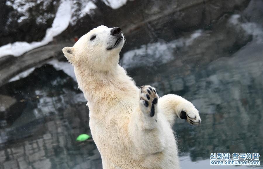 [1](外代二線)北極熊百態拾趣