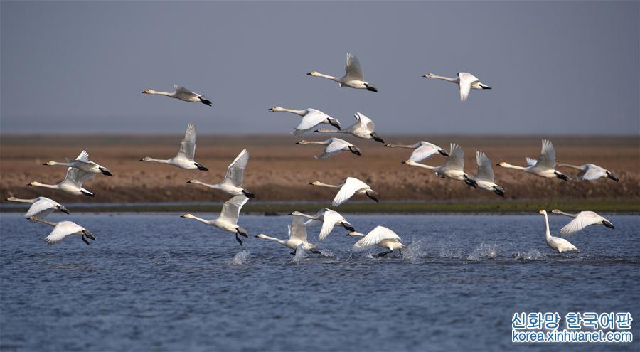 (環境)(2)洞庭萬鳥待北飛