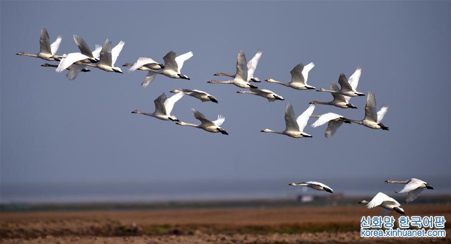 (環境)(5)洞庭萬鳥待北飛