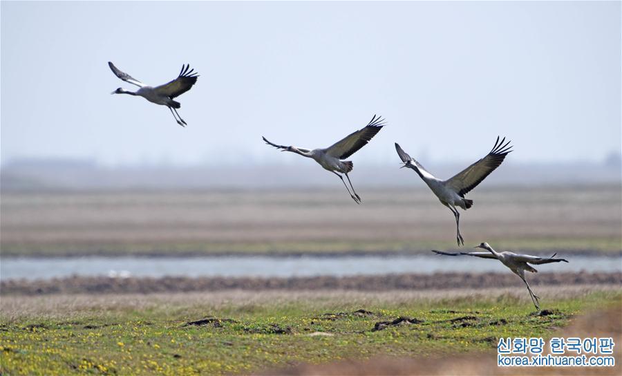 (環境)(6)洞庭萬鳥待北飛