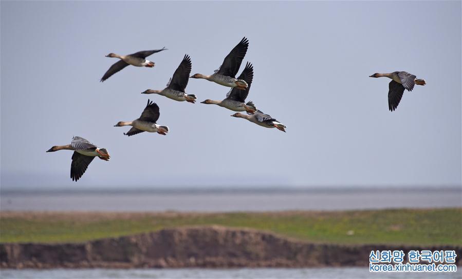 (環境)(8)洞庭萬鳥待北飛