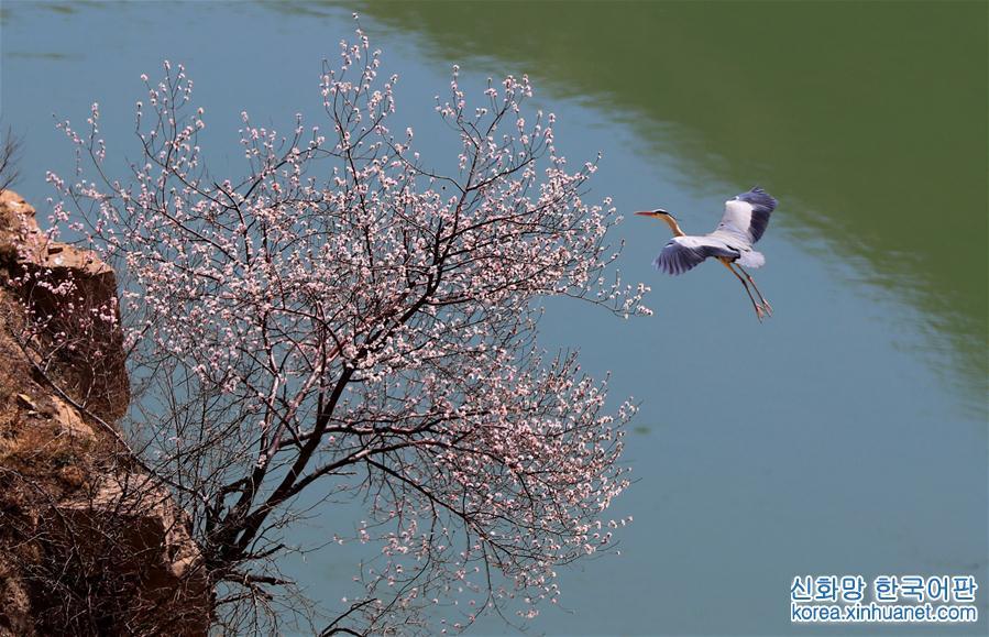 #(環境)(1)蒼鷺舞春光