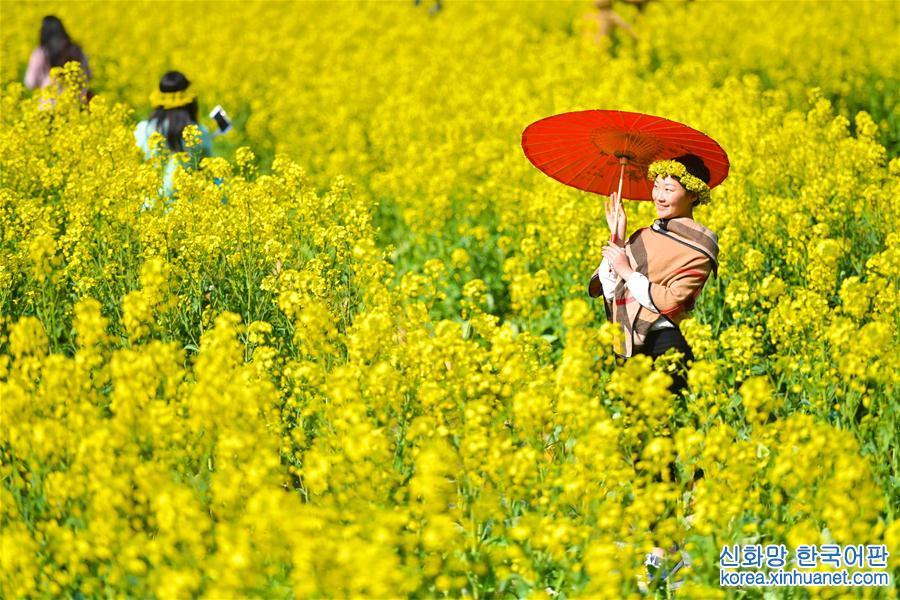 (春季美麗生態)(1)江西婺源迎來踏青潮