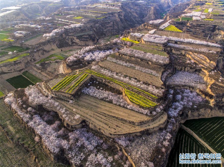 #(環境)(1)三千溝壑披春裝