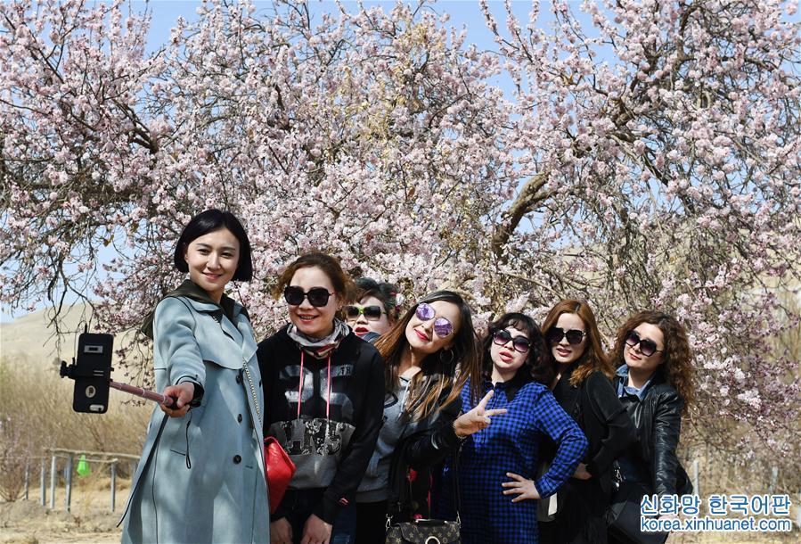 (環境)(1)新疆吐魯番:杏花怒放春來早