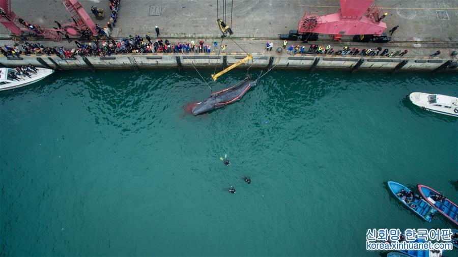 (社會)(1)擱淺抹香鯨死亡