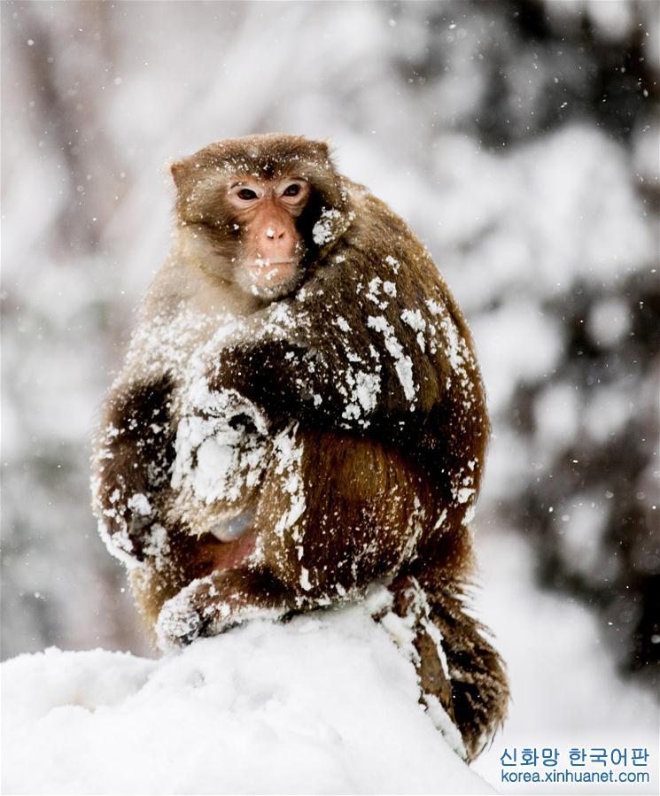 #(環境)(1)獨立雪中