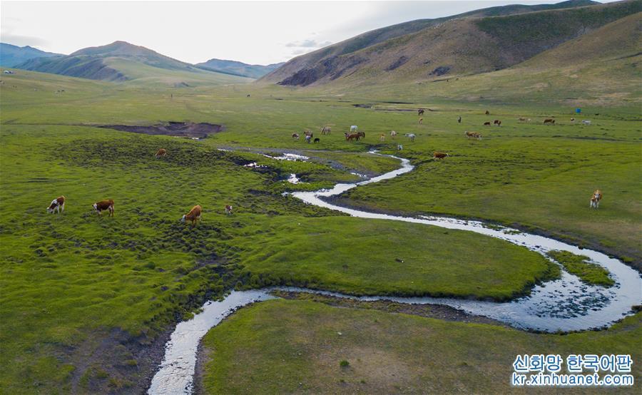 (環境)(1)內蒙古草原進入全面返青期