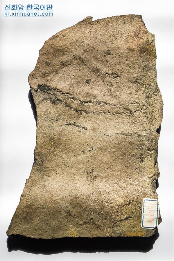 (圖文互動)(1)地球上最古老的動物足跡化石在中國發現