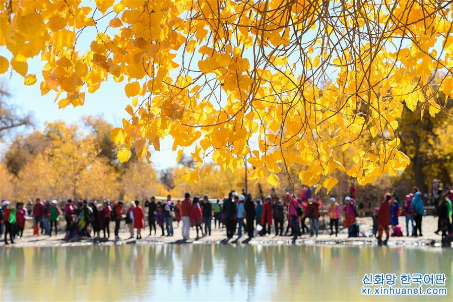 10월10일, 네이멍구 자치구 어지나기(旗)에서 여행객이 후양림(胡楊林)을 감상하고 있다. 완연한 가을로 접어들면서 네이멍구자치구 어지나기 후양림은 금빛 옷을 입은 듯하다. 노란 단풍으로 곱게 물든 후양림이 사막을 수놓으면서 국내외 여행객의 발걸음을 유혹하고 있다. [촬영/신화사 기자 류레이(劉磊)]<br/>
