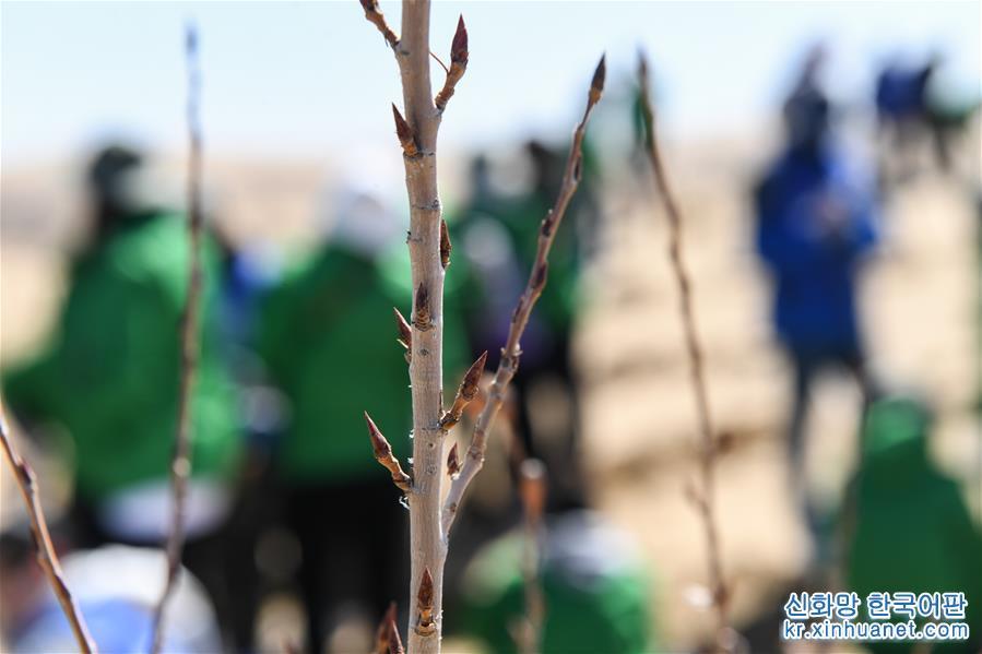 (環境)(1)中韓青年在內蒙古庫布其沙漠植綠
