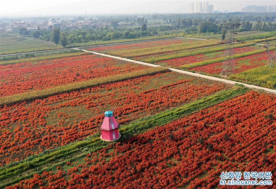 (社會)(1)山西太原:花卉産業助增收