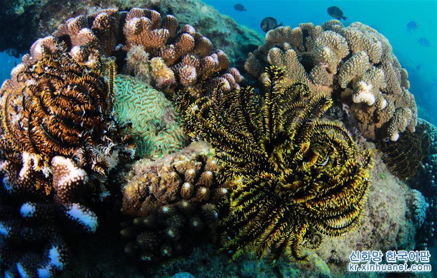 (環境)(4)五彩斑斕的水下世界