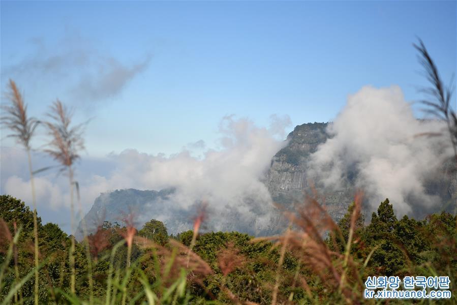(環境)(4)阿裏山秋景如畫