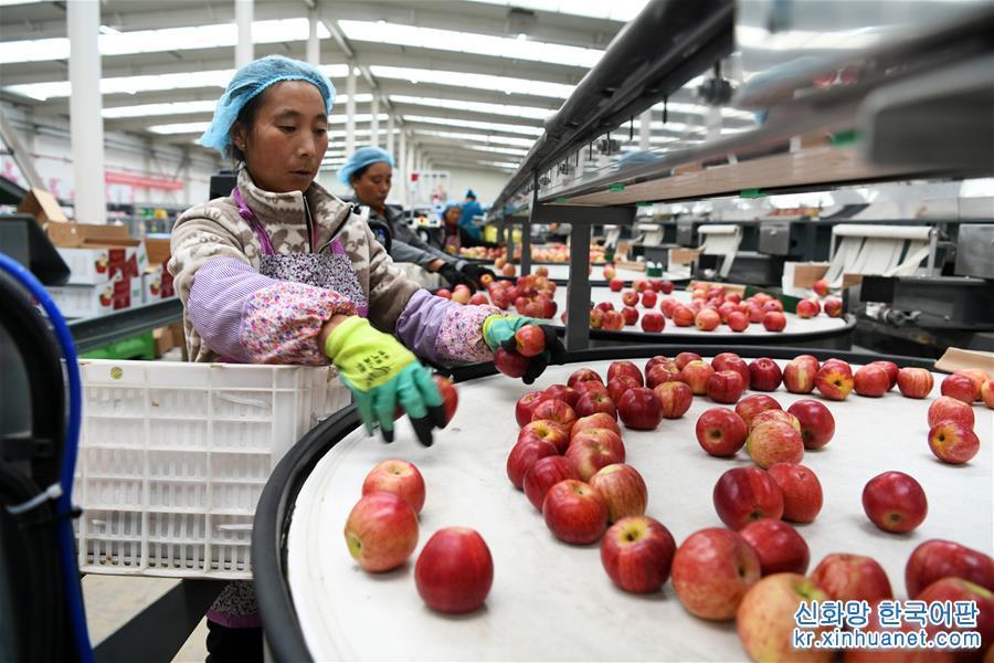 (社會)(1)貴州威寧:産業扶貧結碩果