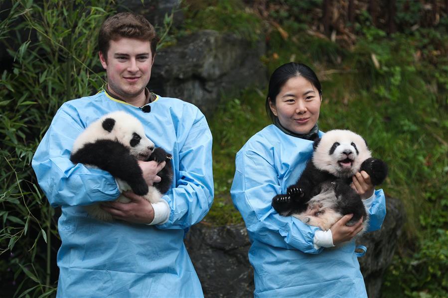 """(國際)(1)比利時出生的大熊貓雙胞胎取名""""寶弟""""""""寶妹"""""""