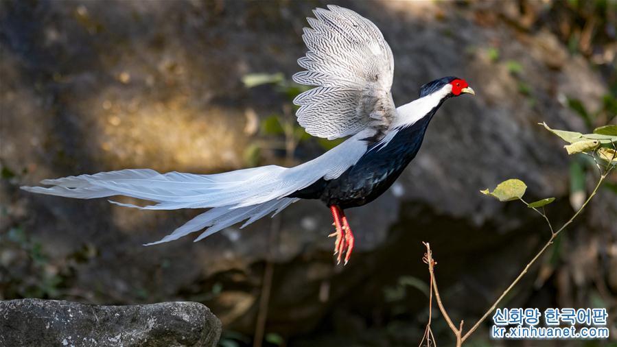 (生態)(2)尋找初冬大美之鳥
