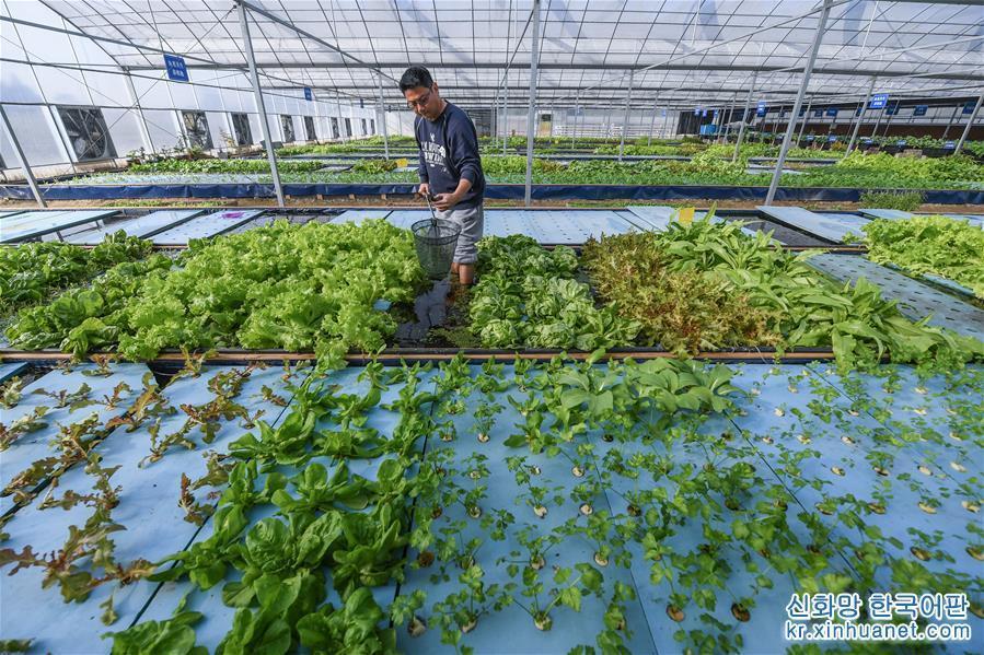 (經濟)(1)魚菜共生  生態循環