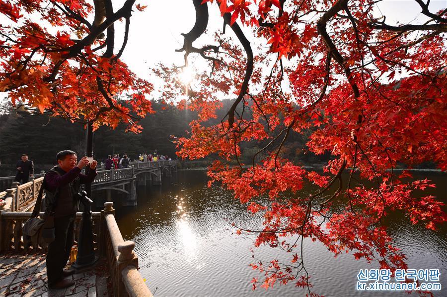 (環境)(1)江西廬山:楓葉美景迎客來