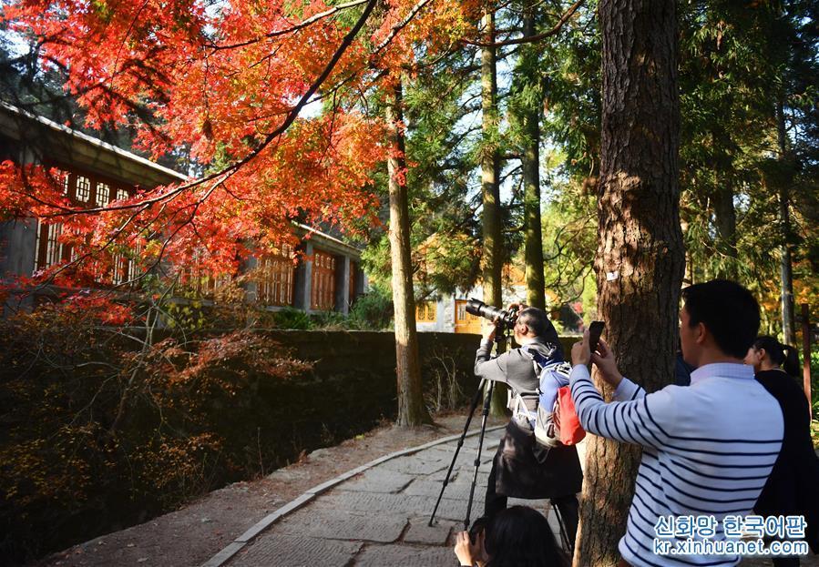 (環境)(2)江西廬山:楓葉美景迎客來
