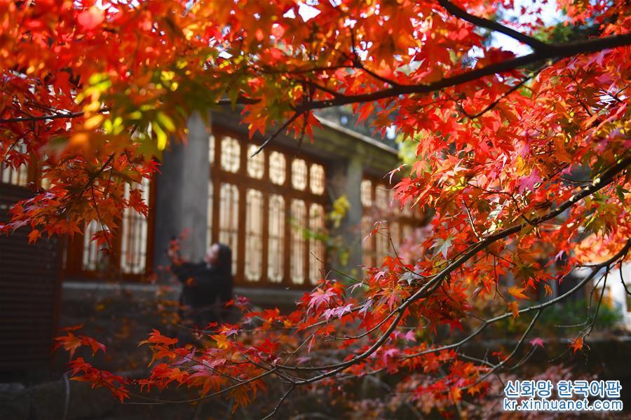 (環境)(3)江西廬山:楓葉美景迎客來