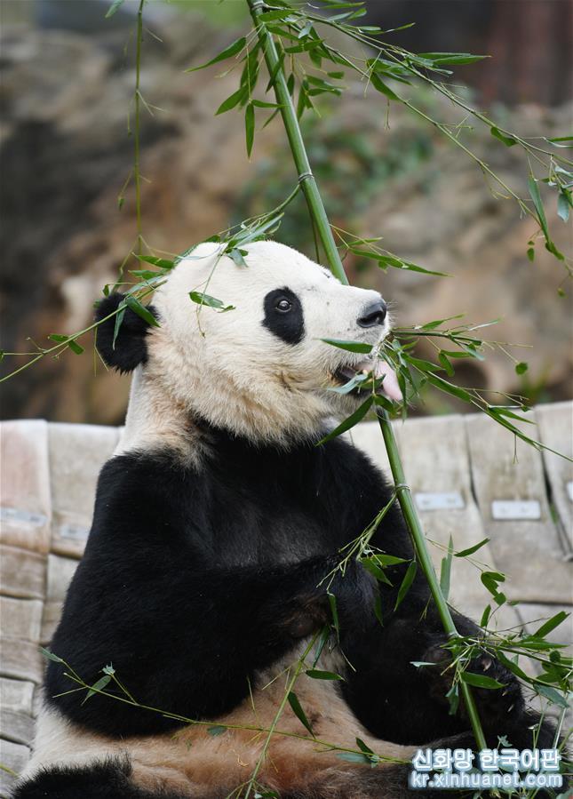 """(國際)(3)旅美大熊貓""""貝貝""""啟程回國"""