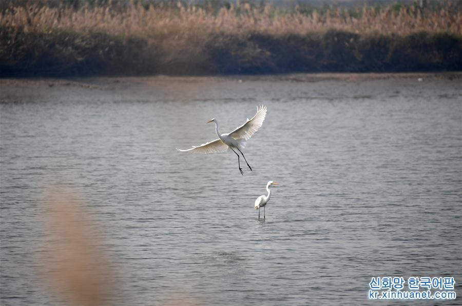 (美麗中國)(1)黃河濕地景如畫