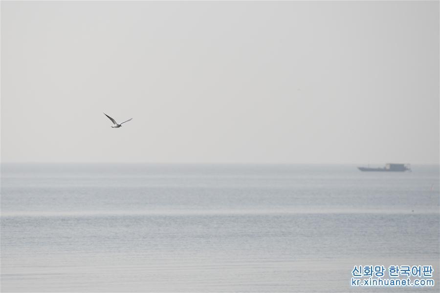 (環境)(1)鳥舞巢湖