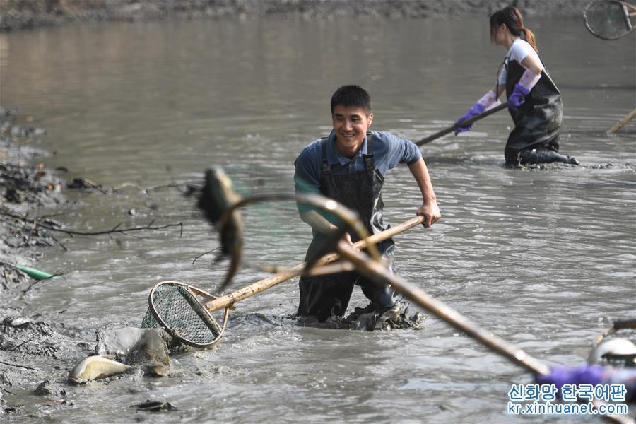 """(社會)(1)杭州:遊客體驗""""幹塘""""捕魚"""
