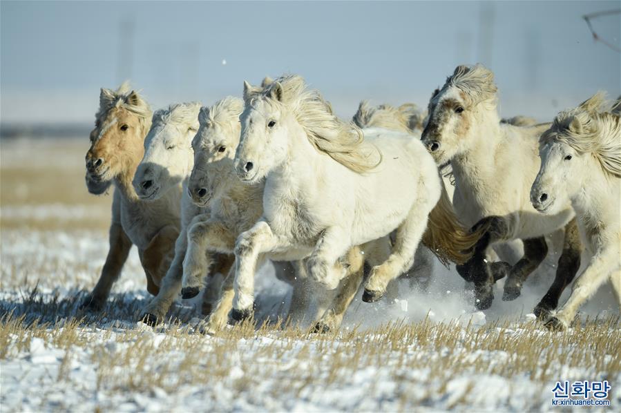 (社會)(3)雪原奔馬