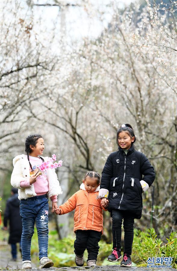 (環境)(4)貴州荔波:賞梅好時節
