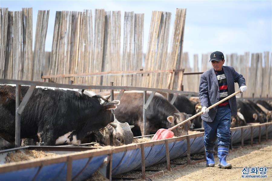 (社會)(1)新疆塔城:龍頭企業帶動農牧民鞏固脫貧攻堅成果