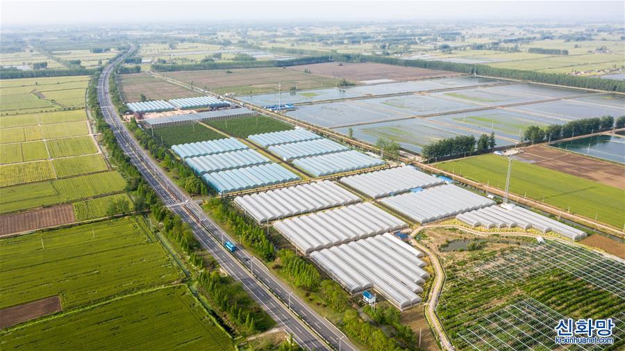 (經濟)(1)江蘇金湖:萬畝農業示范帶 添彩農民致富路