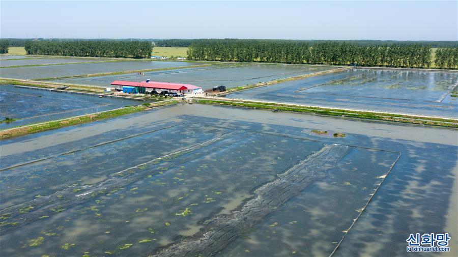 (经济)(2)江苏金湖:小龙虾成熟季 红了餐桌热了经济
