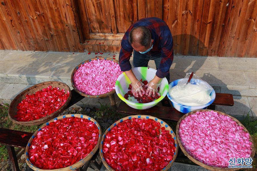 """#(經濟)(2)貴州畢節:""""鮮花經濟""""助農增收"""