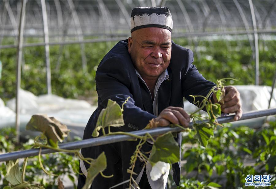 (社會)(1)新疆:夏日農忙正當時