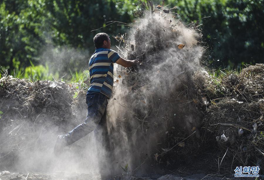 (社會)(3)新疆:夏日農忙正當時
