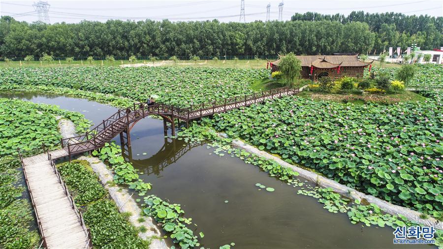 (環境)(1)河北香河:荷花盛開樂遊人