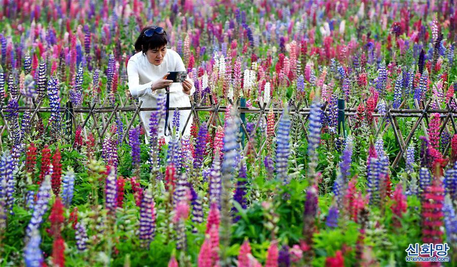 (美丽中国)(1)陕西太白:花开引客来