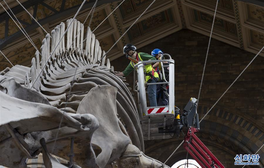 (國際疫情)(1)英國自然歷史博物館為重開做準備