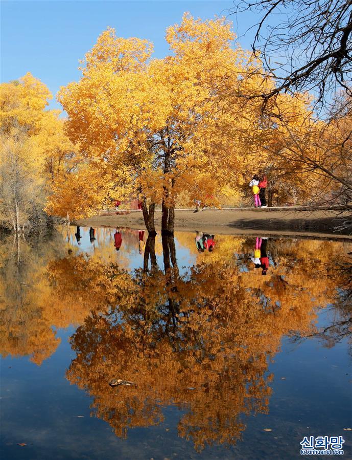 #(環境)(3)甘肅酒泉:金秋胡楊引客來