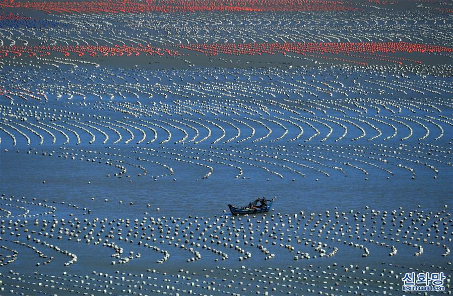 """(美丽中国)(1)福建连江:""""海上牧场""""渔耕图"""