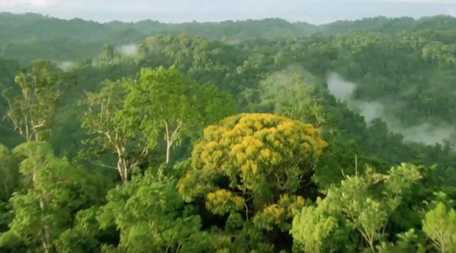 '세계의 정원' 윈난에서 개최된 COP15