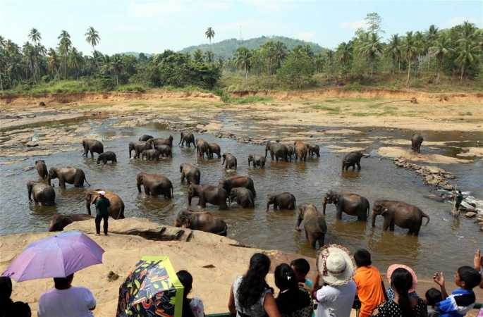 세계 최초의 코끼리 고아원 탐방