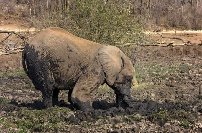 코끼리'타조'를 모방해 피서