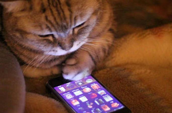 디지털시대 고양이 생활마저 큰 변신