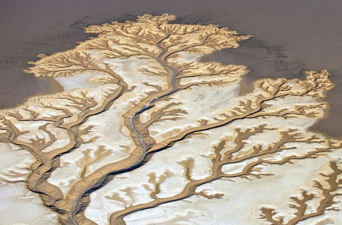 공중촬영: 콜로라도 강 마치 나무가지 같아