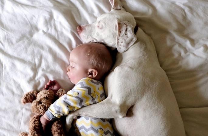 초 치유계 사진: 멍멍이와 아이가 함께 자는 모습