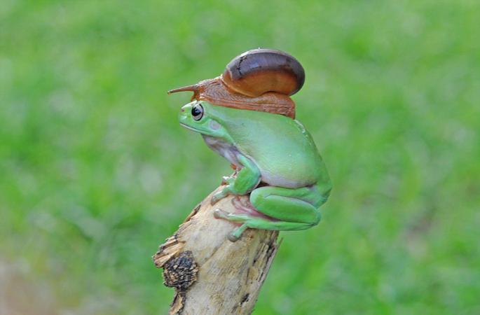 """""""개구리와 달팽이 합체"""" 기이한 화면 포착"""