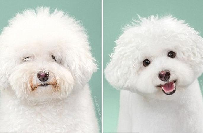 강아지 미용 전후 사진 공개…애완견도 꽃단장 필수?